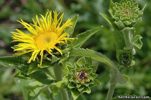 http://herbs.ucoz.com/_pu/0/00366936.jpg