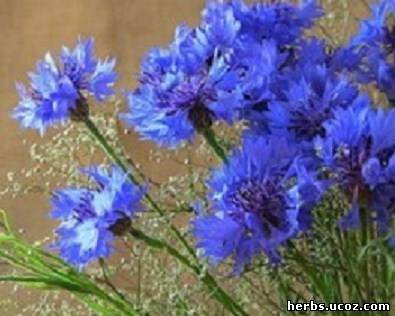 http://herbs.ucoz.com/_pu/0/24485575.jpg