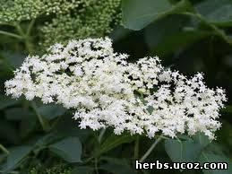 http://herbs.ucoz.com/_pu/0/33534736.jpg