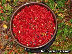 http://herbs.ucoz.com/_pu/0/56012384.jpg